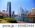 横浜 ランドマークタワー 桜 みなとみらい21 (神奈川県 横浜市) 43482444