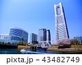 横浜 ランドマークタワー 桜 みなとみらい21 (神奈川県 横浜市) 43482749