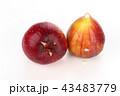いちじくと樹液 43483779
