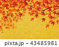 紅葉 秋 和柄のイラスト 43485981