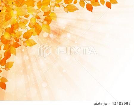 紅葉 もみじ 秋 背景  43485995