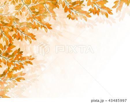 紅葉 もみじ 秋 背景  43485997