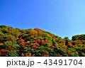 自然 風景 紅葉の写真 43491704