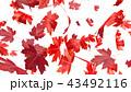 紅葉背景 43492116