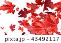 紅葉背景 43492117