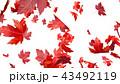 紅葉背景 43492119