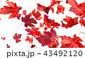 紅葉背景 43492120