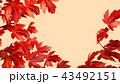 紅葉背景スペース 43492151