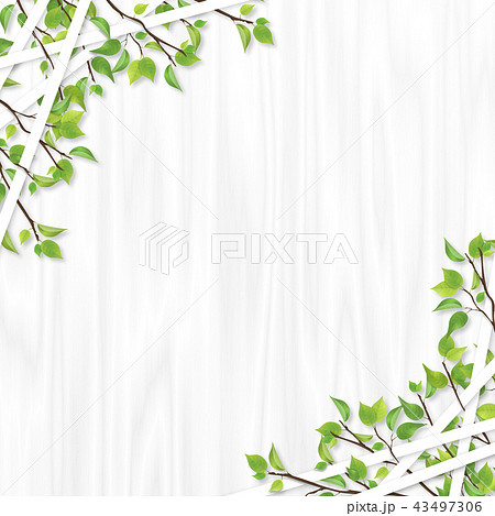 新緑 ライン フレーム 白木 43497306