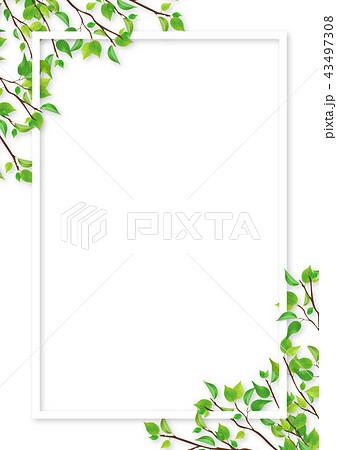 新緑 葉 白いフレーム (PNG、透過、切り抜き素材) 43497308
