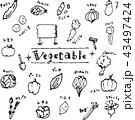 野菜のイラスト集 43497424