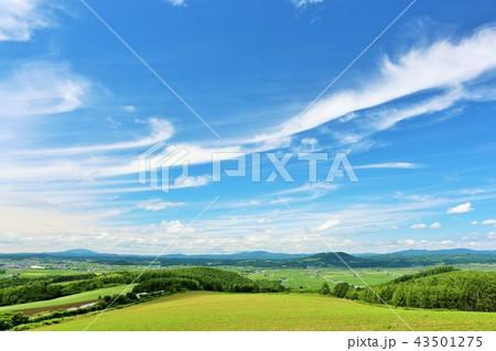 北海道 青空と白い雲の大地 43501275