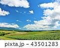 晴れ 北海道 美瑛の写真 43501283