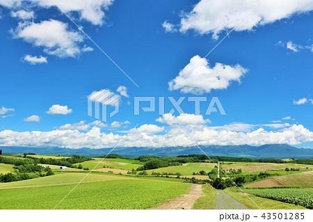 北海道 青空と美瑛の大地 43501285