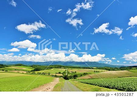北海道 青空と美瑛の大地 43501287