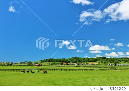 北海道 青空とサラブレッド牧場 43501290