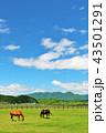 青空 晴れ 馬の写真 43501291