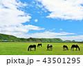 晴れ 馬 サラブレッドの写真 43501295
