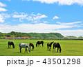 晴れ 馬 サラブレッドの写真 43501298