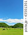 青空 馬 サラブレッドの写真 43501301