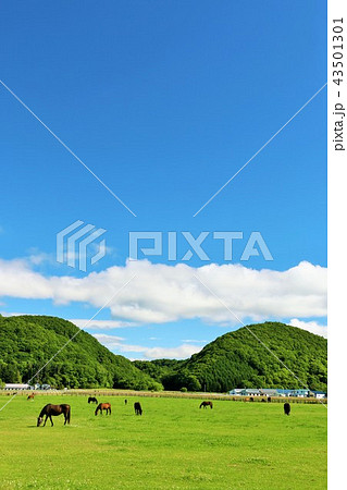 北海道 青空とサラブレッド牧場 43501301