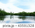 大沼 大沼公園 曇りの写真 43501328