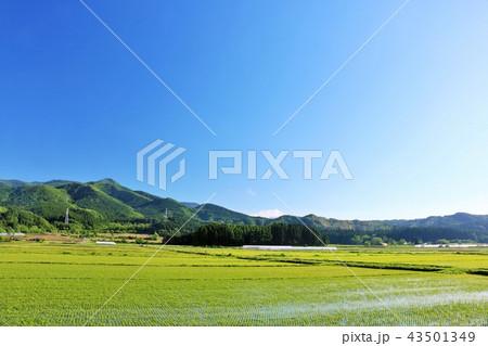 北海道 夏の青空と広大な水田地帯 43501349