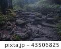 上高地の森林 43506825
