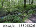 上高地の森林 43506826