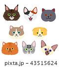 かわいい子猫たちの顔セット 43515624