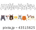 かわいい子猫たちのボーダーセット 43515625