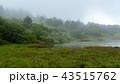 湿原の朝 43515762