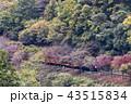 嵯峨野トロッコ列車 嵯峨野 トロッコ列車の写真 43515834