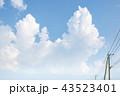 雲 積乱雲 入道雲の写真 43523401