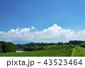田 田んぼ 水田の写真 43523464