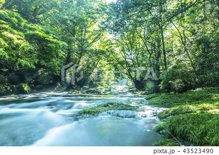 菊池渓谷の光芒 43523490