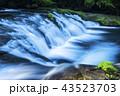 菊池渓谷 渓流 河川の写真 43523703