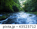 菊池渓谷 渓谷 渓流の写真 43523712
