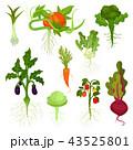 ベジタブル 野菜 ベクタのイラスト 43525801