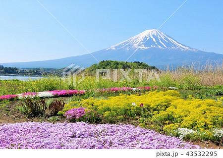 富士山と綺麗な芝桜 43532295