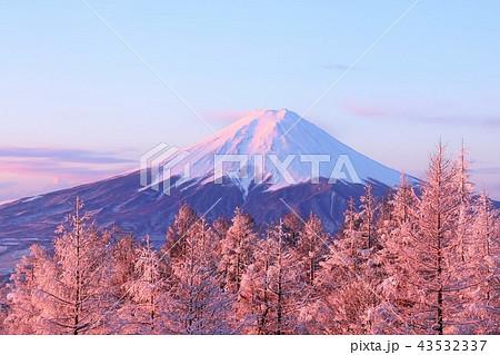 富士山と冬の朝焼けに染まる樹氷 43532337