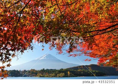 秋の紅葉と富士山 43532351