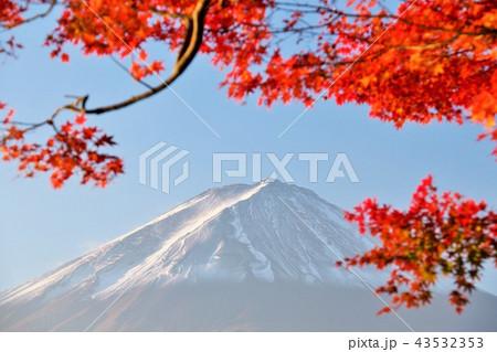 秋の紅葉と富士山 43532353