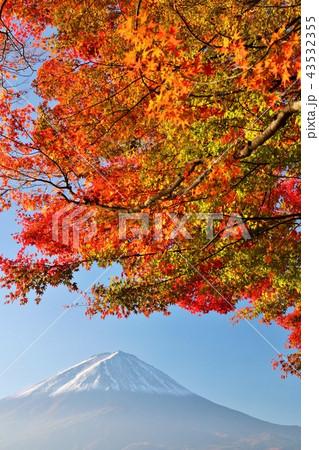 秋の紅葉と富士山 43532355