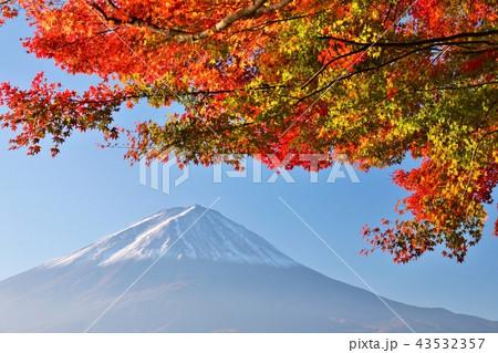 秋の紅葉と富士山 43532357
