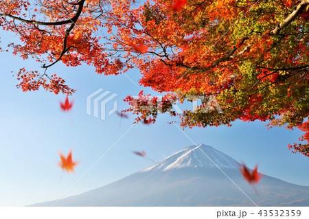 秋の紅葉と富士山 43532359