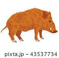 いのしし 動物 亥のイラスト 43537734