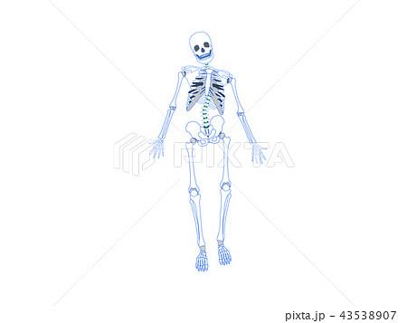 骨格のゆがみ 側弯 43538907