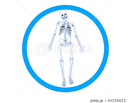 骨格のゆがみ 側弯2 43539023