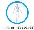 整体 カイロプラクティック 骨格のイラスト 43539134